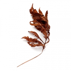 Dried fern | Photo for Jan 3, 2019 | Susan Libertiny