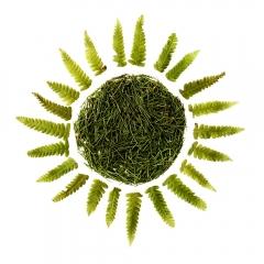 Green-fern-sun-2-2000px
