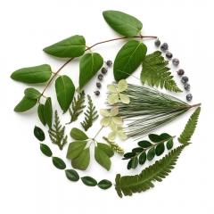 Green-foliage-circle-2-2000px