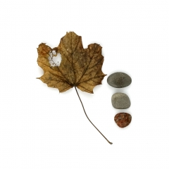 Maple-leaf-superior-stones-2000px