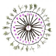 Maple-twigs-juniper-berries-circle-2-2000px