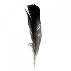 Seagull Feather | Photo taken Jan 24, 2019 | Susan Libertiny