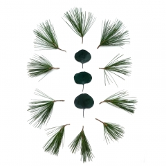 White-pine-eucalyptus-2-2000px
