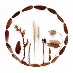 Locust leaf circle | Photo taken Jan 10, 2019 | Susan Libertiny
