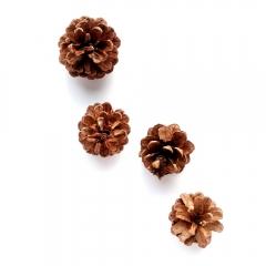 pine-cones-3-2000px